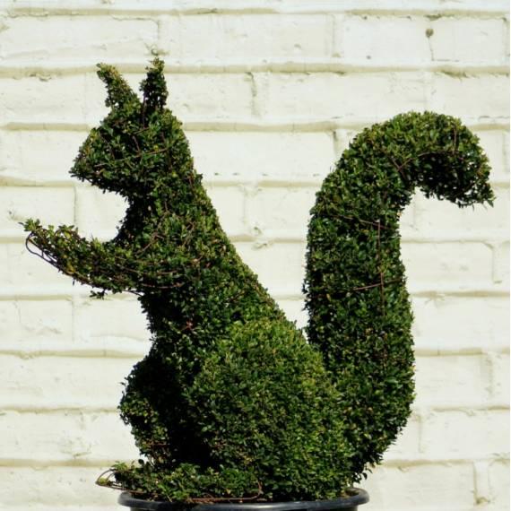 Żywe figury z bukszpanu - Wiewiórka