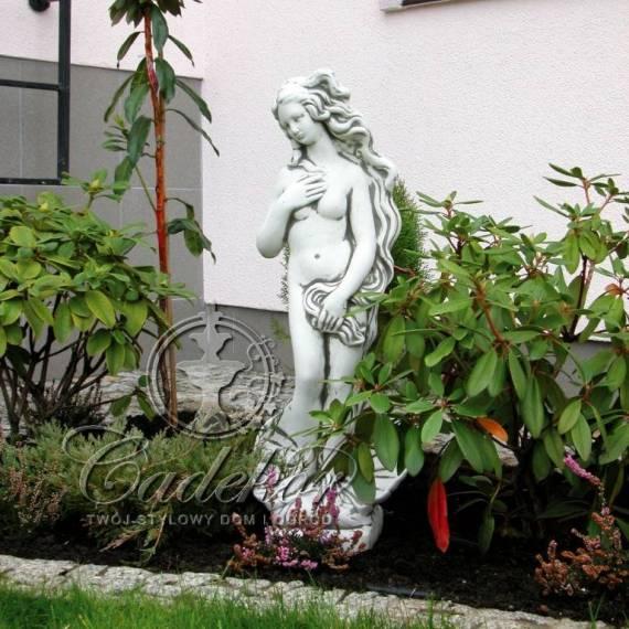 Afrodyta w muszli - duża