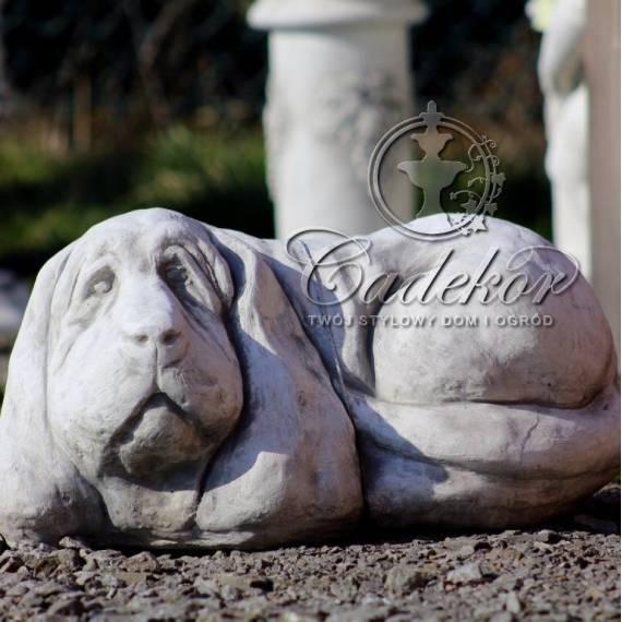 Pies - jamnik ogrodowy