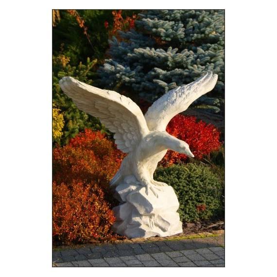 Adler - groß
