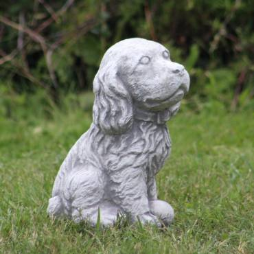 Boxer doggy