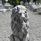 The dignified lion
